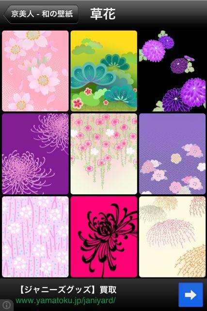京美人 草花1