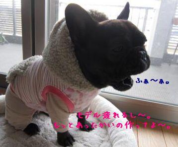 IMG_4799_convert_20120104192236_2.jpg