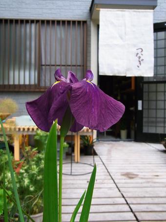 江戸菖蒲2