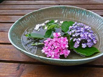 たわみ紫陽花