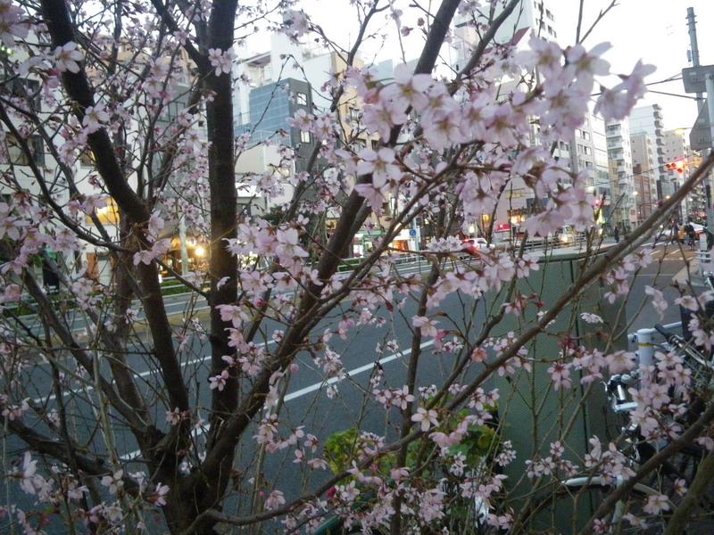 春、です。