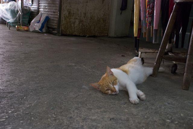 沖縄県の猫
