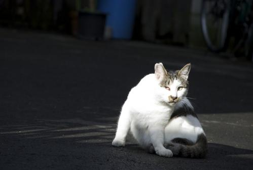 荒川区の猫