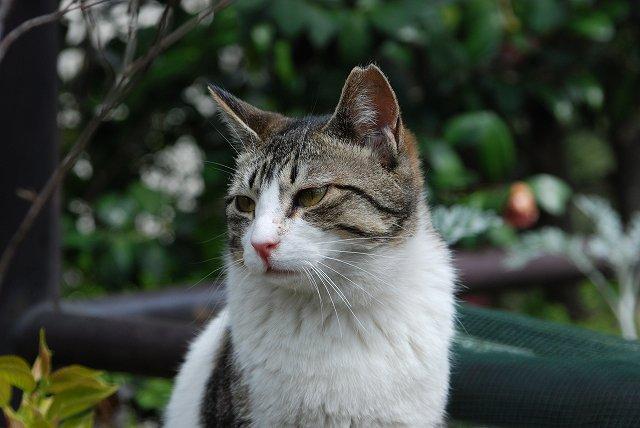 目黒区の猫