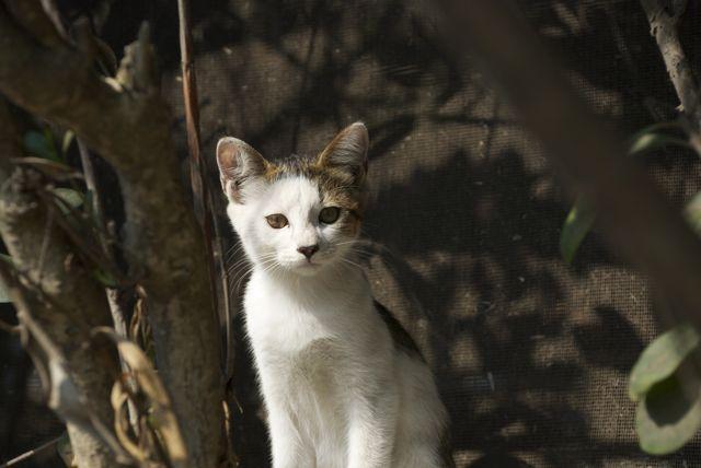 千葉県の猫