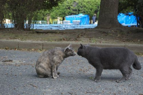 福岡県の猫