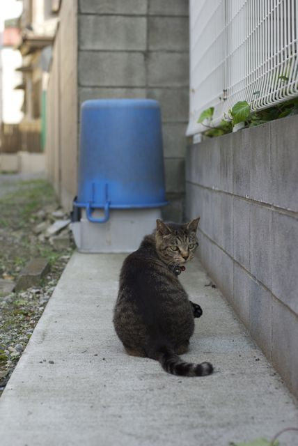 神奈川県の猫