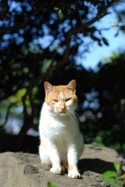 埼玉県の猫