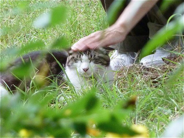 平和島の猫