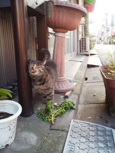 台東区の猫