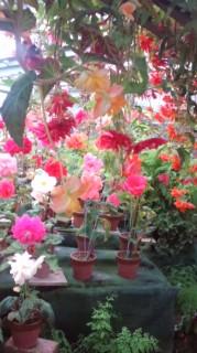 花の降る午後