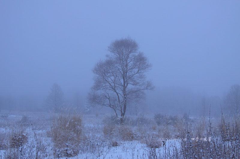 野辺山高原 霧の風景