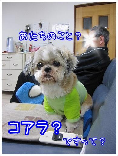 20100316(2).jpg