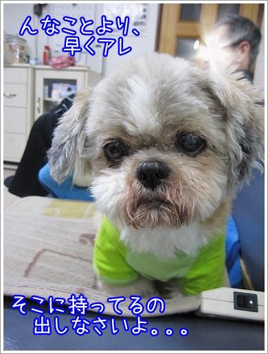 20100316(3).jpg