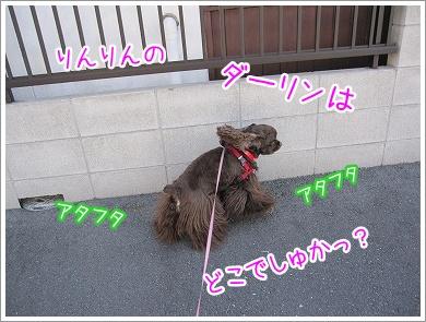 20100319(4).jpg