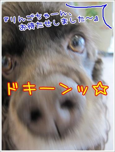 20100413(3).jpg