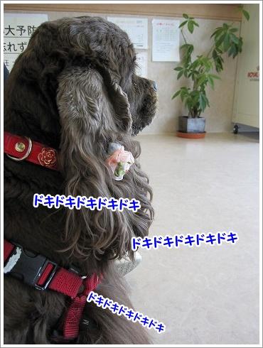 20100413(4).jpg