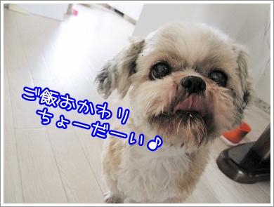20100415(6).jpg