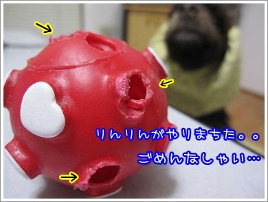 20100513(5).jpg