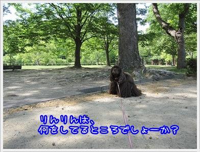 20100529(4).jpg