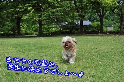 20100606(5).jpg
