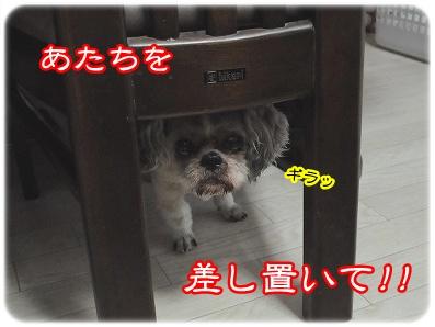 20100612(3).jpg