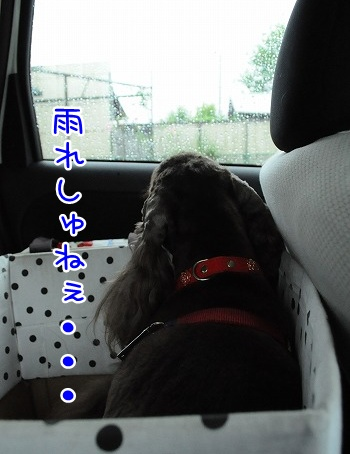 20100613(2).jpg