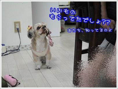 20100614(5).jpg