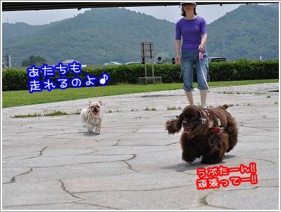 20100619(3).jpg
