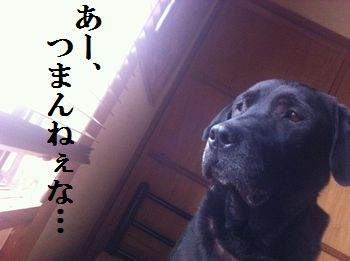 1106blog_jun2.jpg