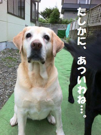 110709_ubu1.jpg