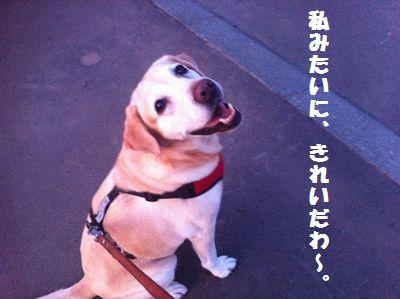 110723_ubu.jpg