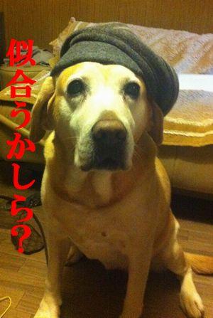 1107blog_ubu.jpg