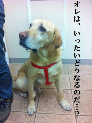 1115blog_tsubu2.jpg