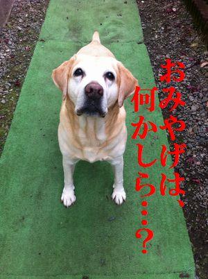 1115blog_ubu1.jpg