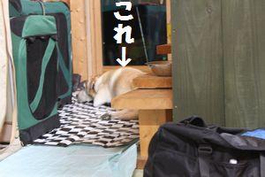 0813_ubu待つ2