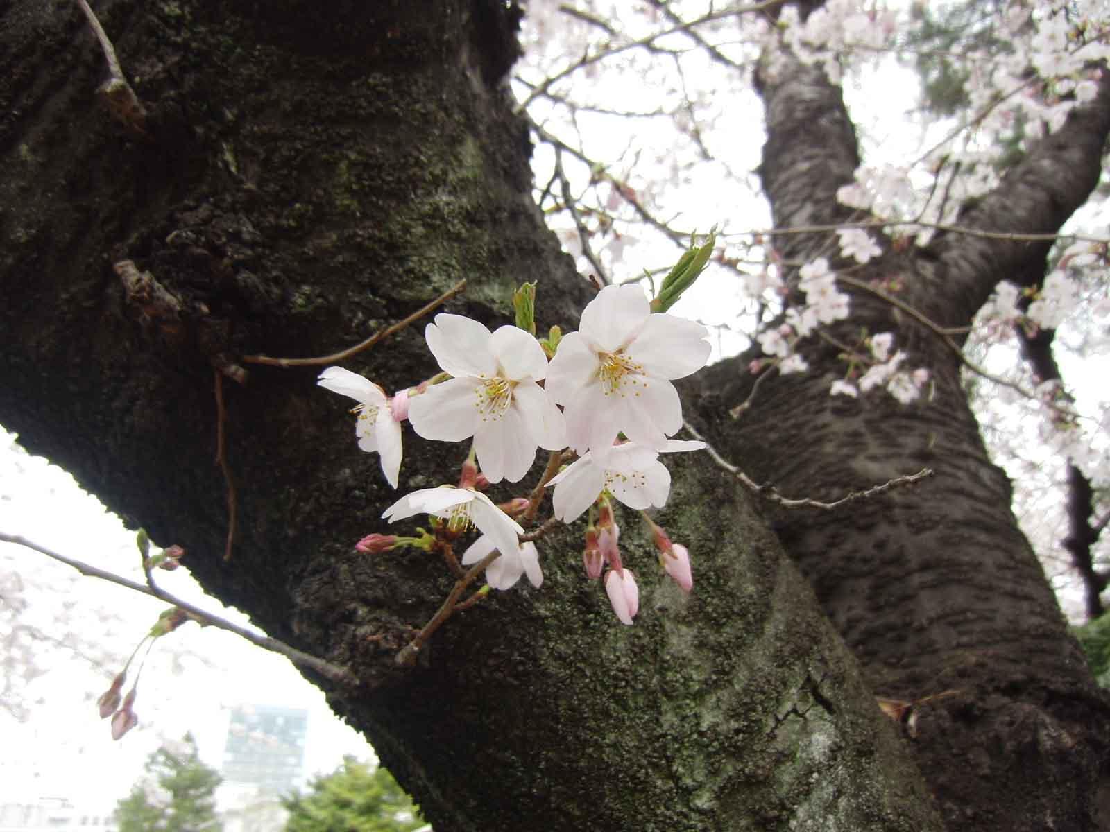 幹から咲いてる花がすき♪