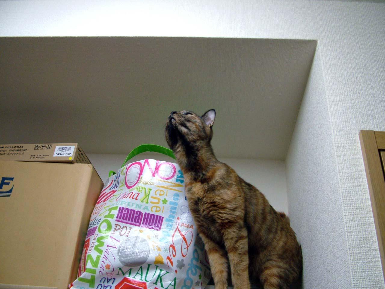 常に上を目指すネコ、それがアタシ