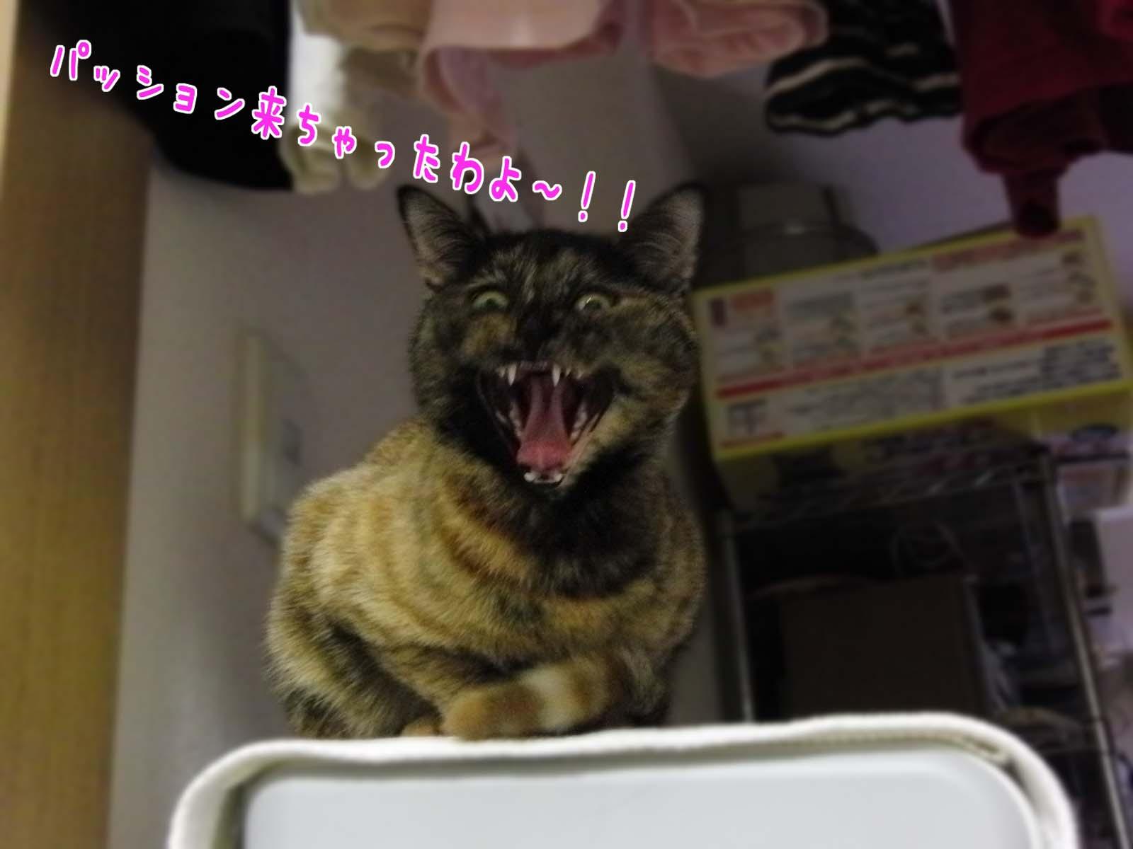 しつこいわよ~!!!!
