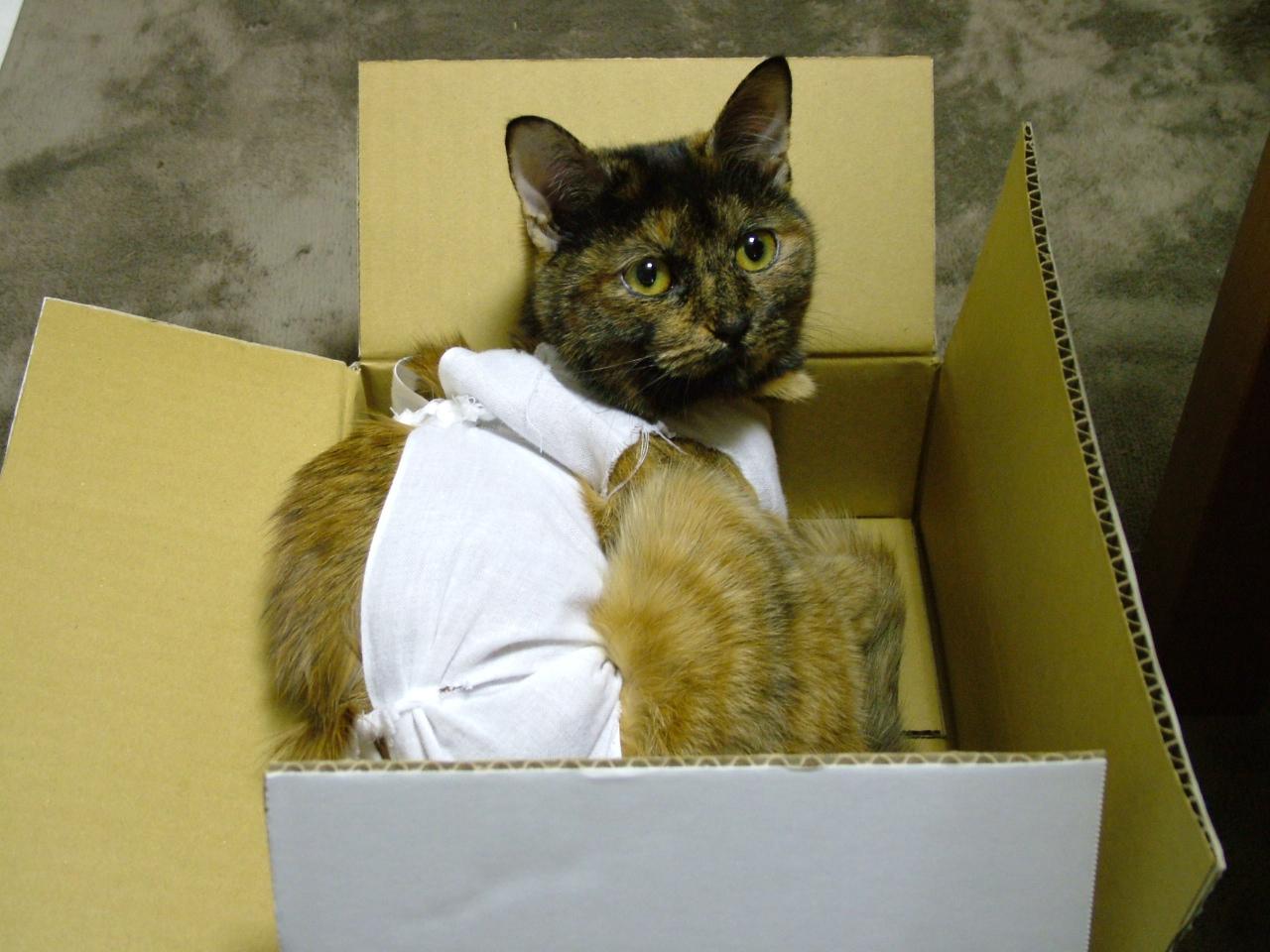 これ、アタイの箱、けって~い♪