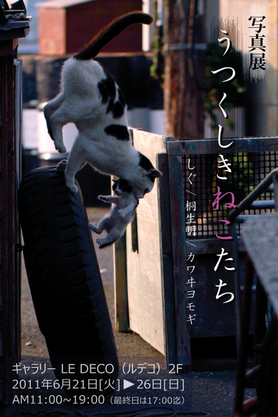 「うつくしきねこたち」しぐ / 桐生 明 / カワヰヨモギ写真展