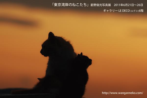 「東京湾岸のねこたち」星野俊光写真展