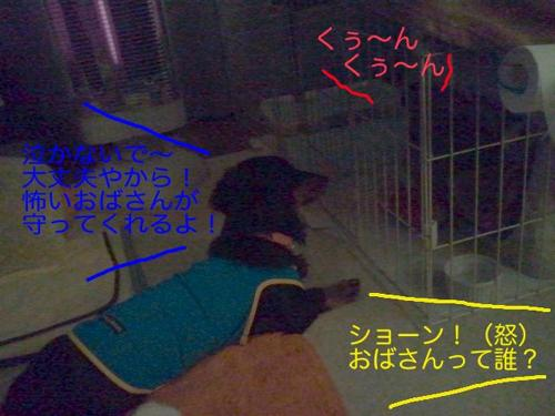 th_1120005313.jpg