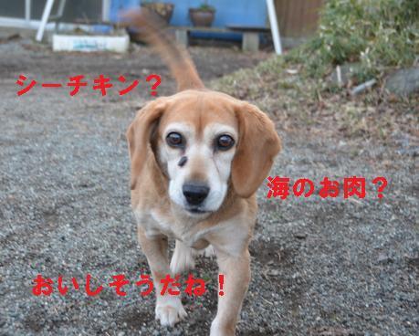 sakumaguro.jpg