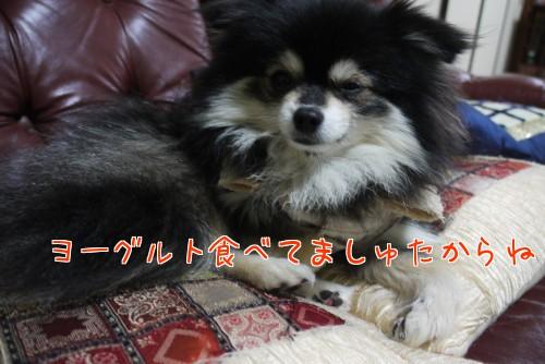 0201a_20120201222022.jpg