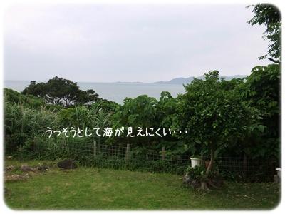 2013_04150007.jpg