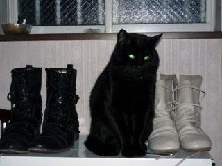 自ら 靴になったり