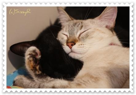 kitties091014b.jpg