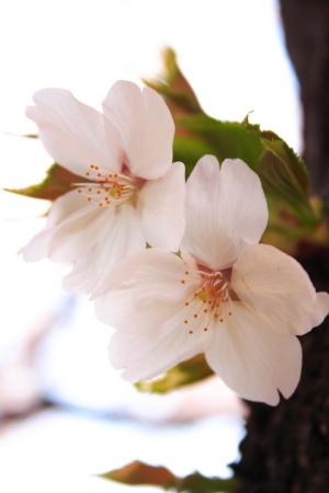 2011お花見。