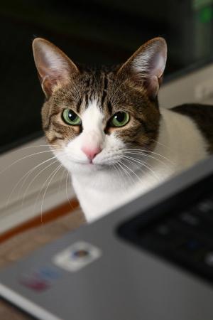 猫の会@お江戸